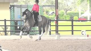 Robert Dover: Sitting the Canter Transition