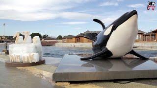 Marineland TV - Actu N°134 - Joyeux anniversaire à notre orque INOUK qui fête ses 17 ans