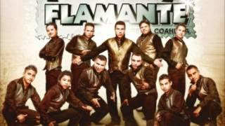 Malevola - Tropicalisimo Flamante