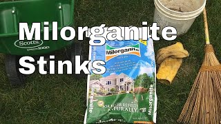 The 1st Milorganite Application  Can it save my lawn?