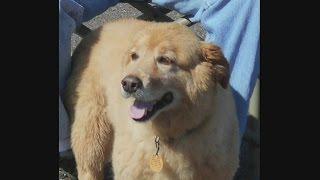 Wolf Kills Dog Walking Off-Leash Near Duluth