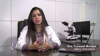 ⭕️ Carcinoma Epidermoide - Câncer de pele em animais  / Bicho Fashion Hospital Veterinário 24h