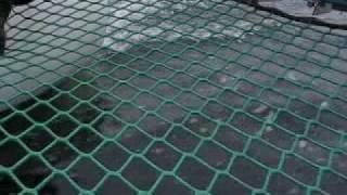 QuickStep 800 @ The Congos - Fisherman
