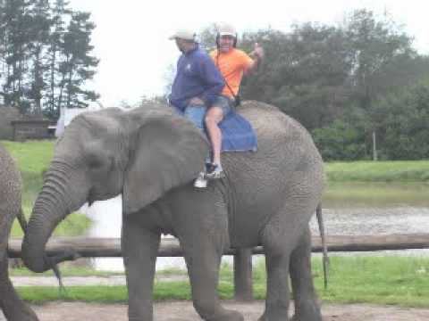 KNYSNA ELEPHANT PARK   SOUTH AFRICA  –  JAY – JATOBÁ