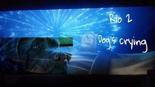 Rio 2 - dog's cry because blu gets blowen up