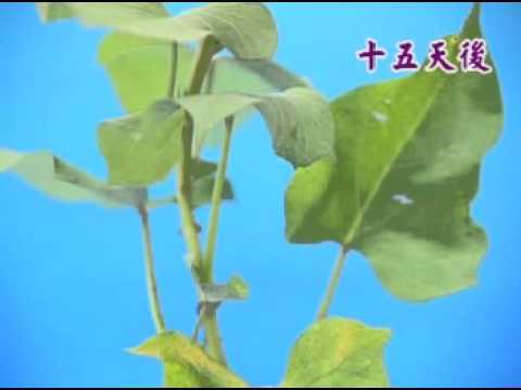 植物營養器官的繁殖 - YouTube
