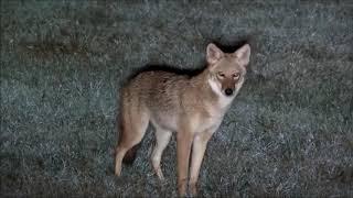 Mylène Farmer est free, interviews en musique N°14