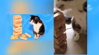 Moe es el gato que juega Jenga