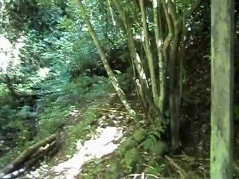 La biosfera Jinotega, Nicaragua cloud forest part 1