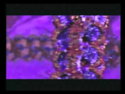 DNA DA KROMOZOM NASIL KATLANIR-HİSTON PROTOİN