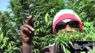Marlon Asher - Ganja Cowboy [OFFICIAL VIDEO] By TRU REELZ PROD.