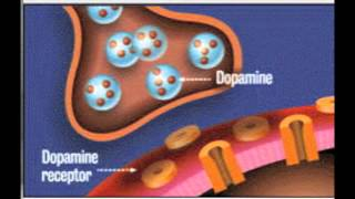 Dopamine in action