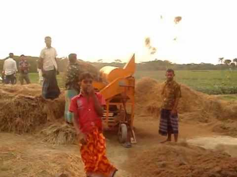 Paddy Threshing in Bangladesh