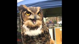 Rare Owl Call