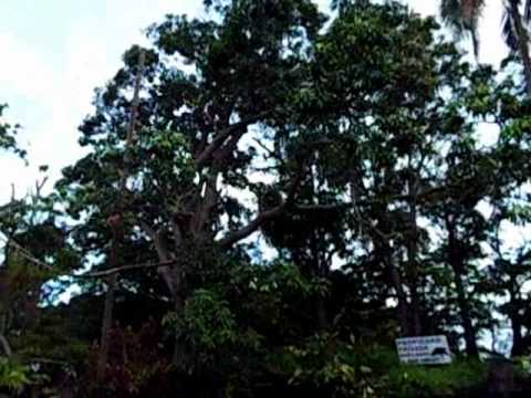 El Gran Lago de Nicaragua – Lago Cocibolca-