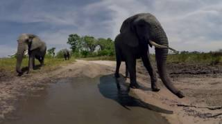 360 Video African Safari Experience
