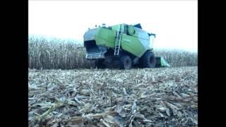 Kukurydza na ziarno 2016 ㋡ Claas Tucano 320 & Scania