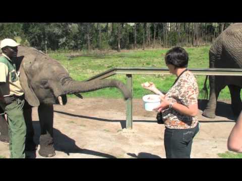 Alimentando Elefantes em um Santuário de Animais na África