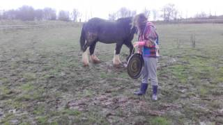 Sound healing for horses