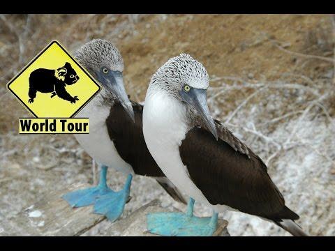 Voyage en Équateur Isla Plata Puerto Lopez Maryse & Dany © Youtube