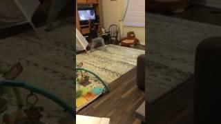 Reid moana dancing