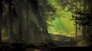 Celtic Music - Forest Lullaby