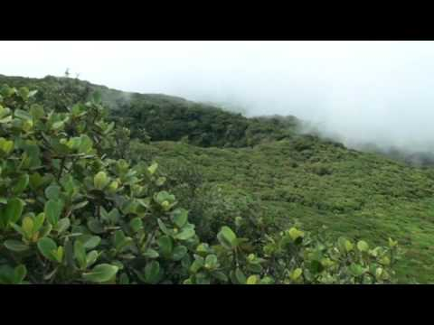 jungle view mombacho – nicaragua