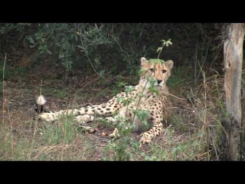 PakkoPäästäPois! -Etela-Afrikka Trailer