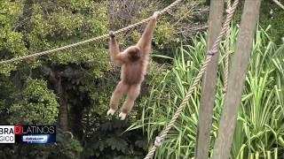Naples Zoo tiene buenas razones para celebrar en grande este 2019