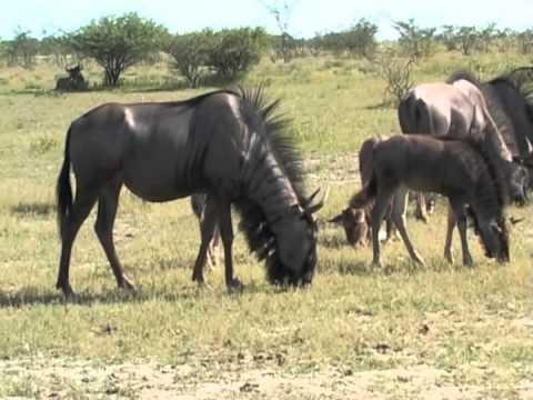 Namibia Trailer (Capetown 2005)