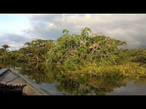 Amazon Fun in Cuyabeno National Park, Ecuador