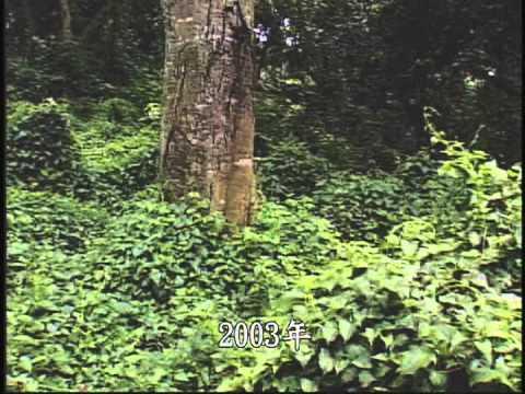 生態危機-入侵台灣的外來種植物 - YouTube