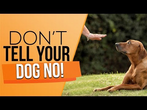 How To Discipline Your Puppy And Correct Your Adult Dog The RIGHT WAY!