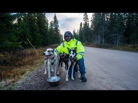 Terje på Mountain King sledehundkennel