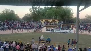 Jariepo en Villa Juarez SLP 16 de noviembre de 2017