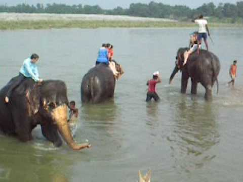 Adventurous Women Nepal Trip 2009 – Bathing The Elephants at Chitwan National Park – Part 1