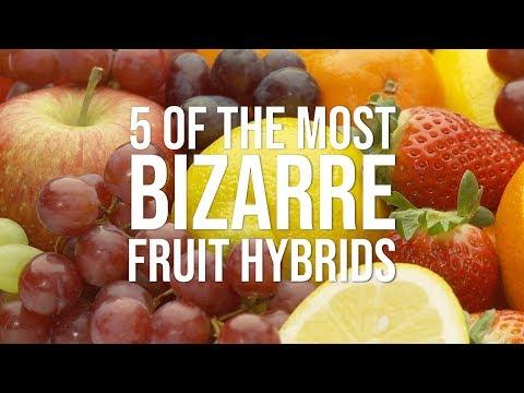 5 of the Most Bizarre Fruit Hybrids