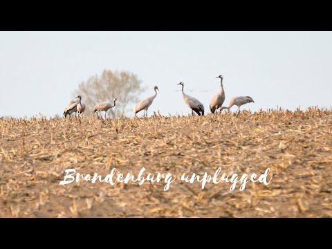 Brandenburg unplugged: Kraniche beobachten im Herbst