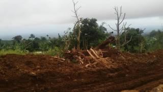 Kahoy sa ibabaw sa Bukid
