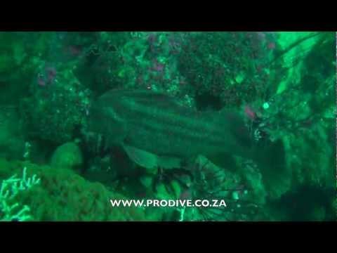 Horse Fish & Shark