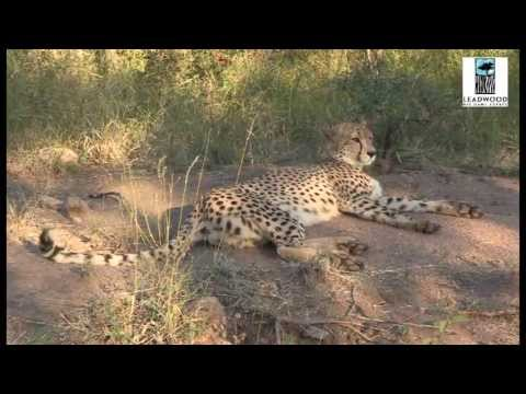 Leadwood Big Game Estate – South Africa Travel Channel 24