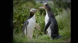 Mark Carwardine's New Zealand Wildlife Photos