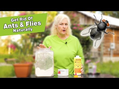 Natural Pest Control: How to get rid of ants & fruit flies