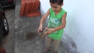 Sapo Cururu & Gustavo Ferreira