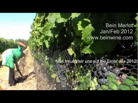 BeinWine_Jan-Feb2012.wmv