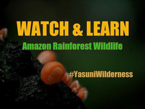 Defensive Amazon Forest Crab