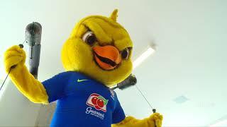 Canarinho se prepara para os próximos jogos da Seleção Brasileira