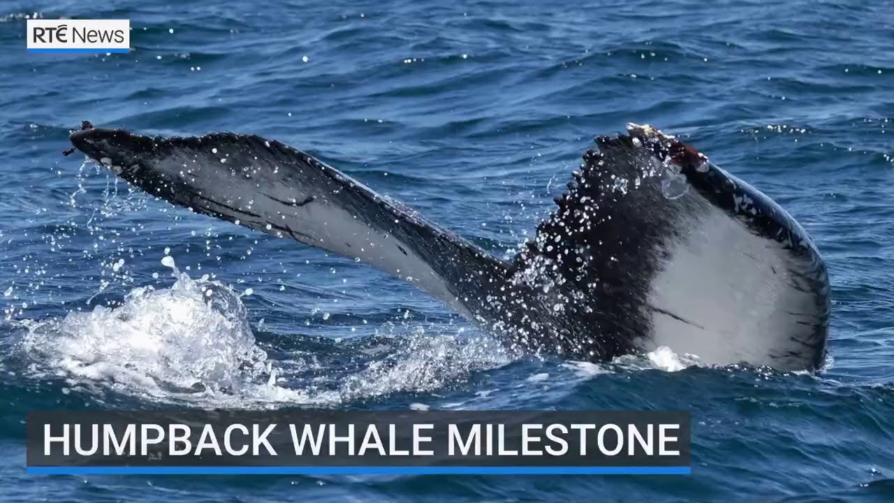 Humpback Whale Milestone in Ireland