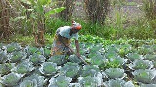 Agricultura sostenible en Cabinda, Angola