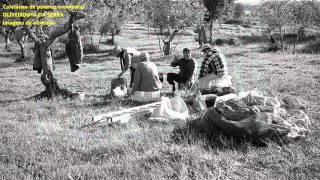 268 OLIVEIRINHA DA SERRA-Legendado-Coletânea-António Teixeira–Cabeceiras Basto/Póvoa Varzim/música